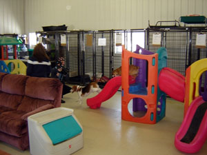 Kyle is filming some small dogs playing inside the facility.