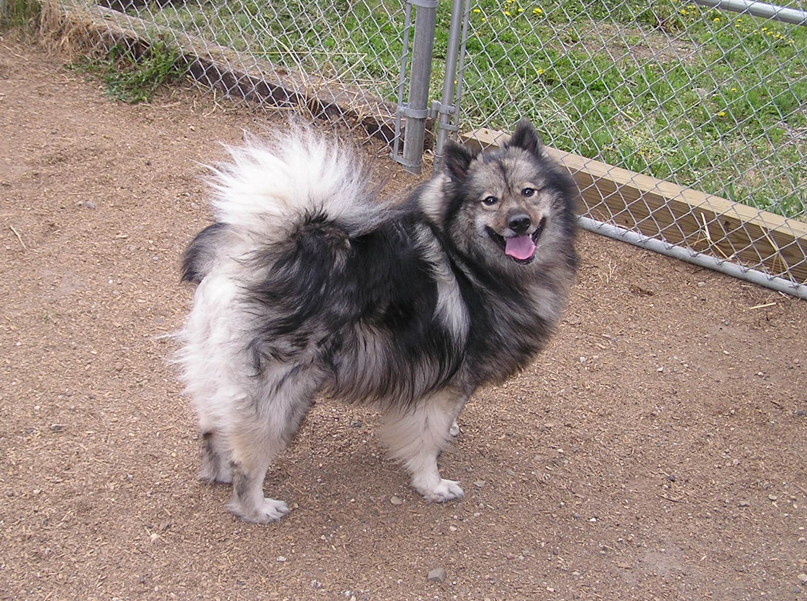 Dog Kennels Buffalo Minnesota